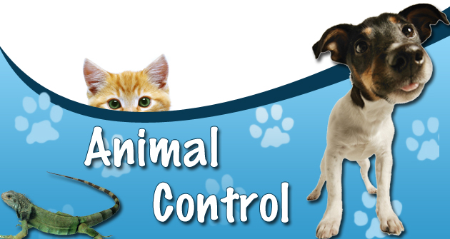 animal control Chicago animal care and control protects public safety and ensures the humane care of animals through sheltering, pet placement, education and animal law enforcement.